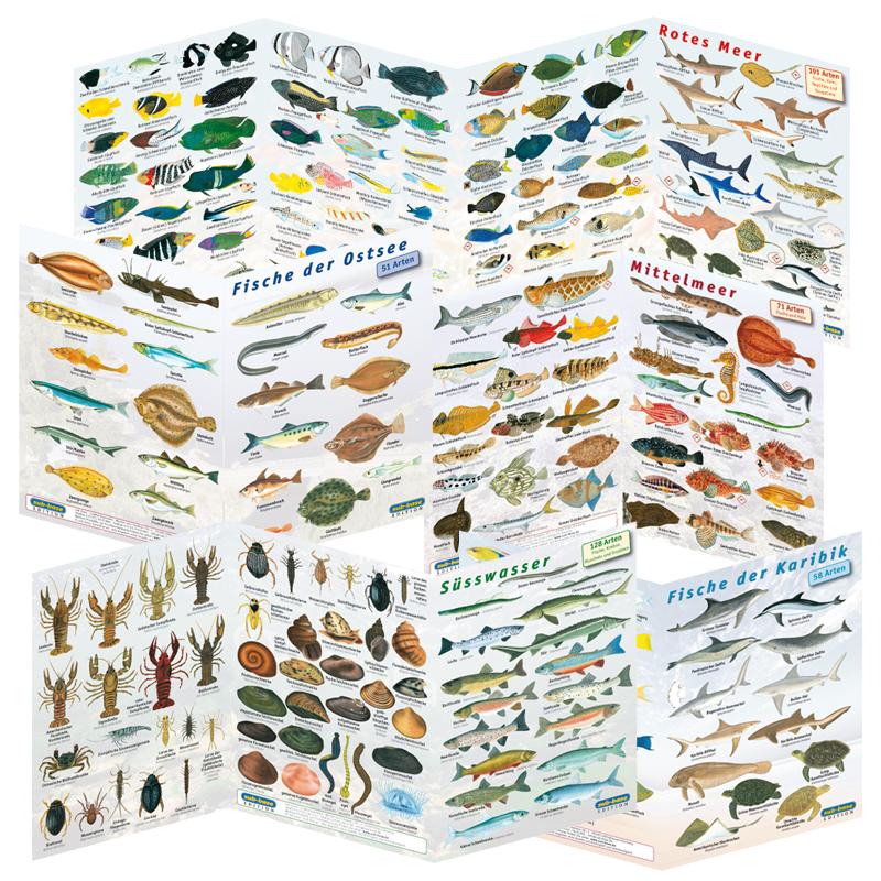 Fischfaltkarten - Komplettset