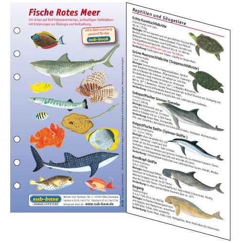 Fischkartenset Rotes Meer