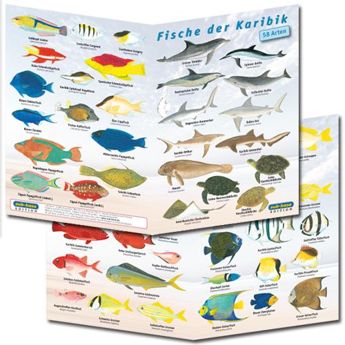 Fischfaltblatt Karibik