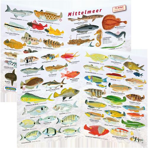 Fischfaltblatt Mittelmeer
